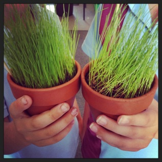 Teach Science / Watching Grass Grow