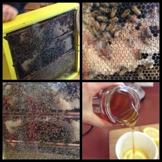 Teach Science /Bees